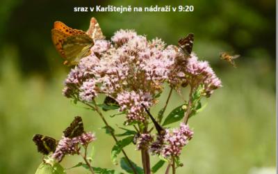 Entomologická exkurze 16. 6.